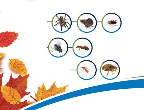 Plagas de otoño