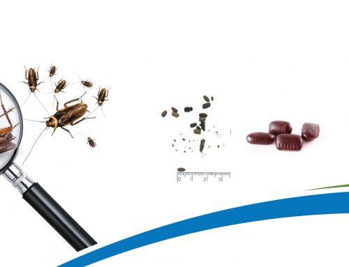Cómo identificar plaga de cucarachas
